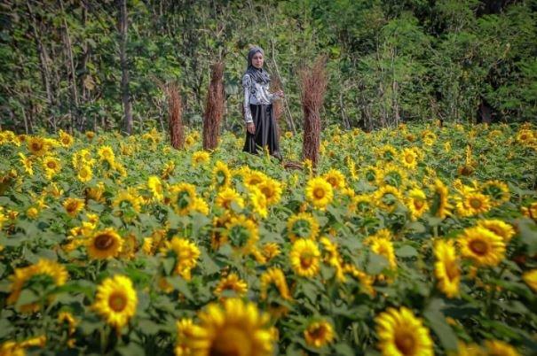 Taman Bunga Nawari Wisata Gunung Kidul