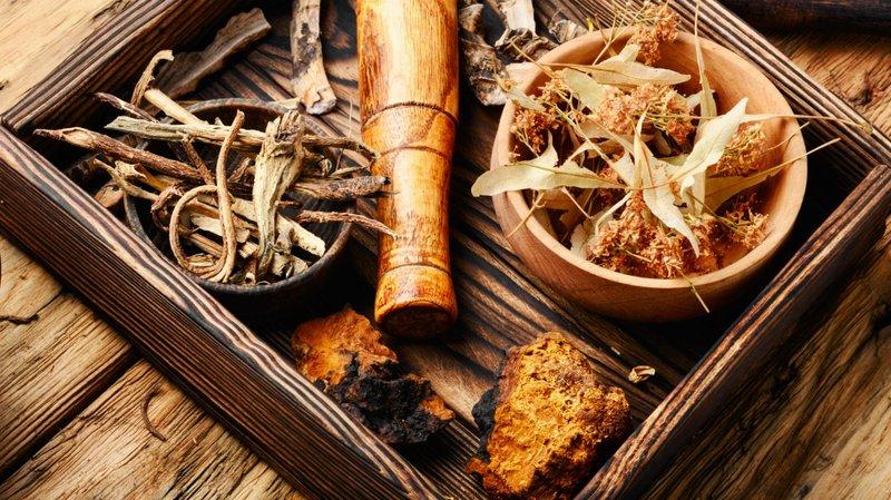 Tanaman Herbal untuk Mencegah gondongan