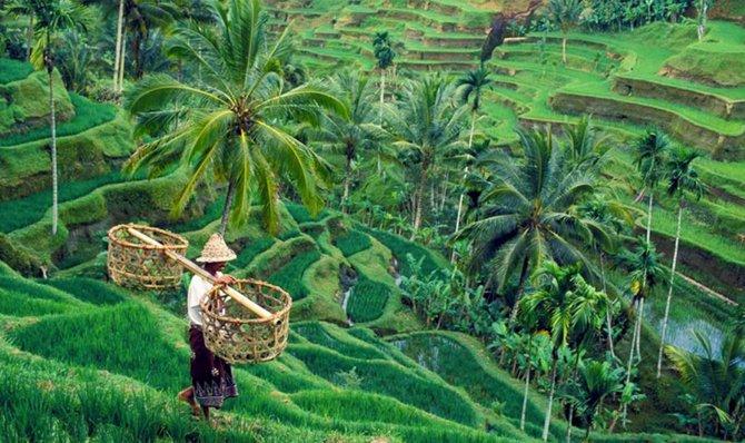 Tempat wisata di Bali gratis - Tegallalang Rice Terrace.jpg