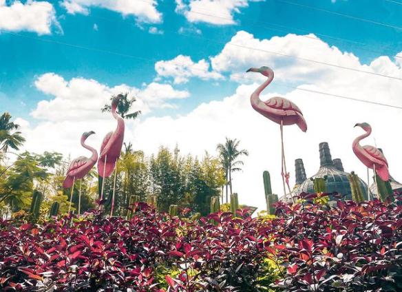 Wisata Dusun Semilir Flamingo.png