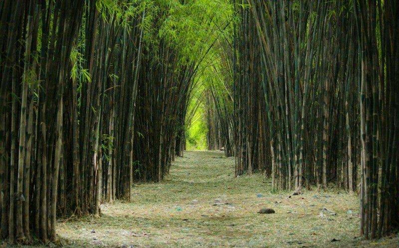 Wisata Surabaya - Hutan Bambu Keputih