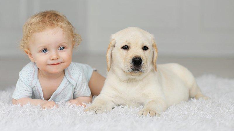 XX Manfaat Memiliki Hewan Peliharaan Untuk Bayi 4.jpg
