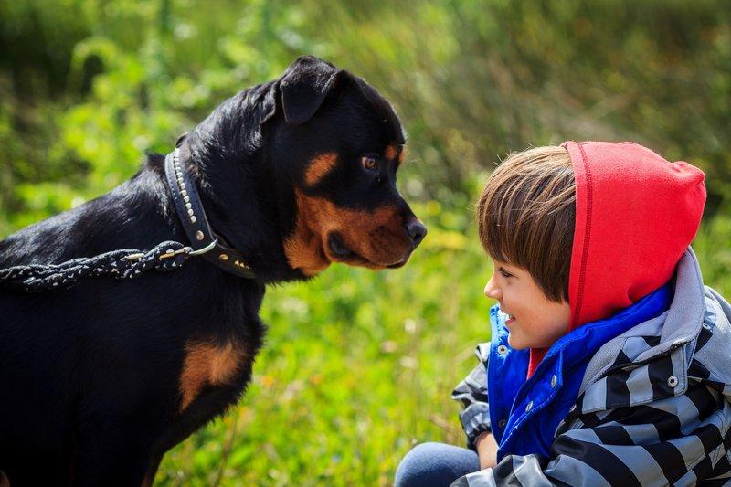 a-boy-in-front-of-a-rottweiler-167352407-583a7ac65f9b58d5b1ff05f4.jpg