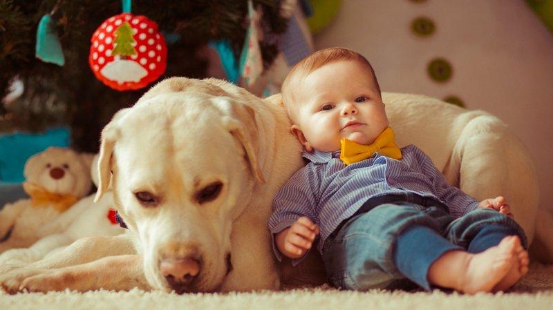 Merawat Bayi Baru Lahir di Rumah Dengan Hewan Peliharaan