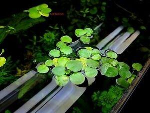 water-plants-indoor.jpg.jpg