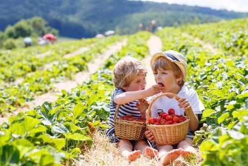 anak makan organik