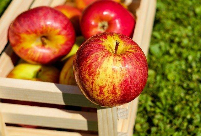 apel untuk makanan berserat.jpg