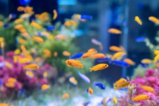 Arti mimpi ikan di akuarium dapat mewakili perasaan terjebak