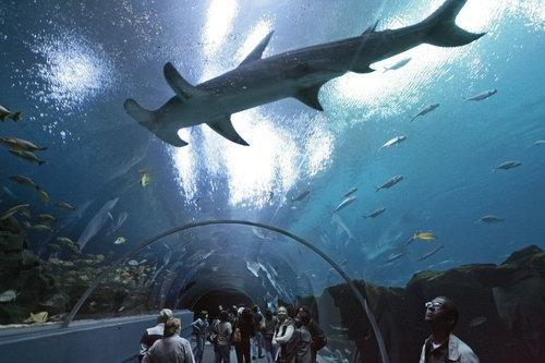 aquarium taman pintar