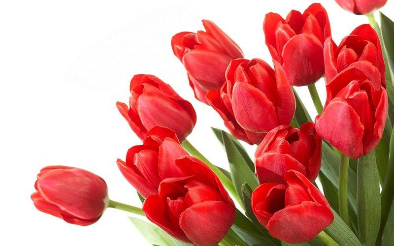 arti bunga-2.jpg