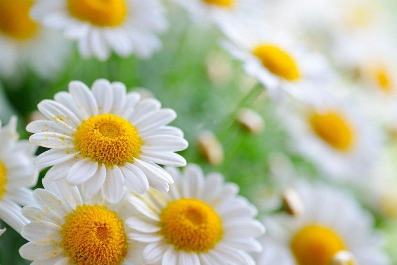 arti bunga-5.jpg