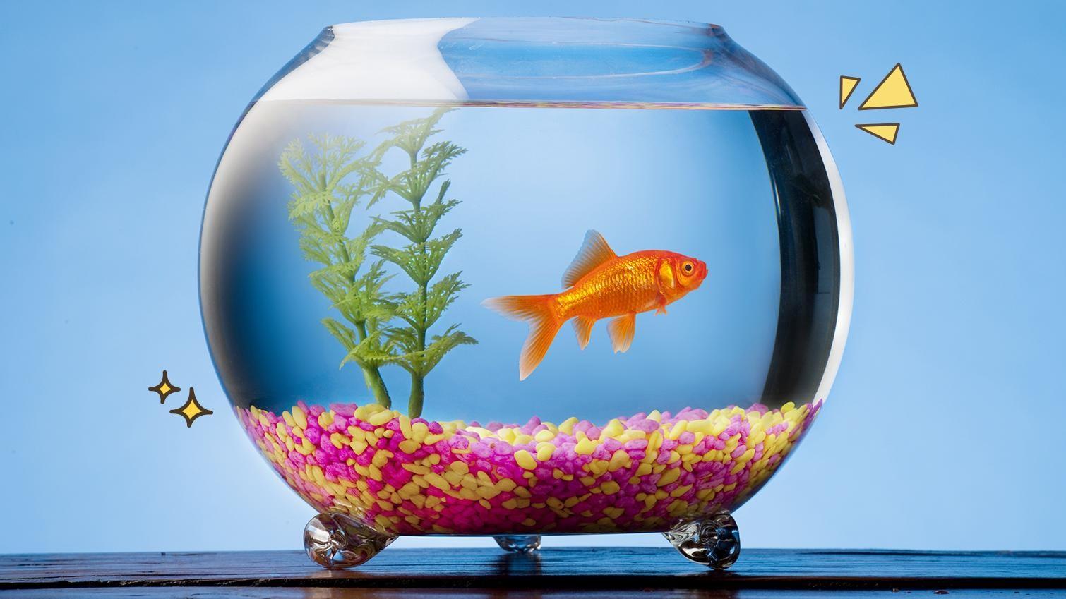 Download 960 Gambar Ikan Hias Kecil Air Tawar Terbaru