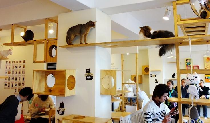 austin cat cafe