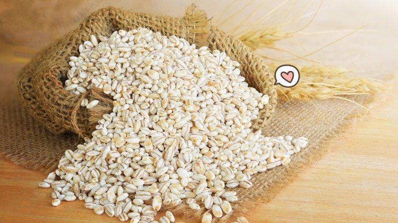 apa itu barley.jpg