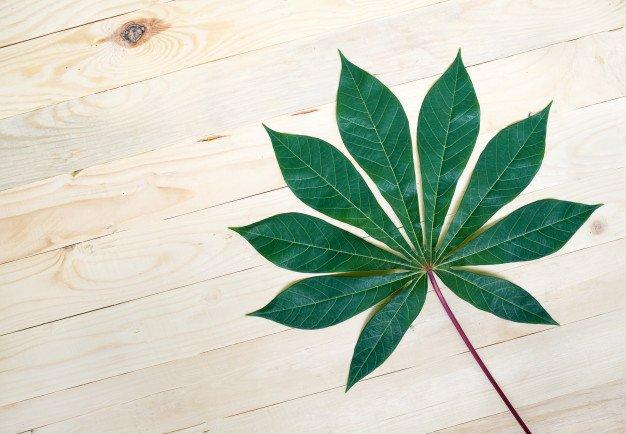 daun singkong bermanfaat untuk kesehatan mata