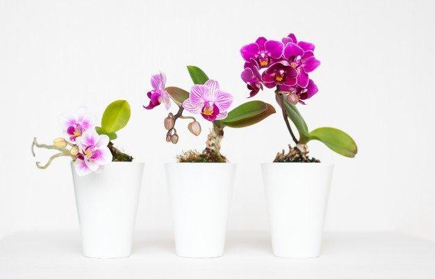 Tanaman dalam pot dapat menambah koleksi ibu mertua