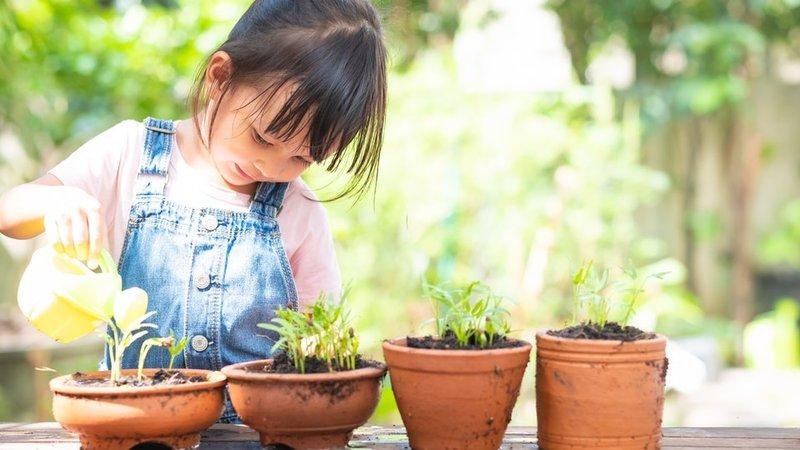 terapi tanaman
