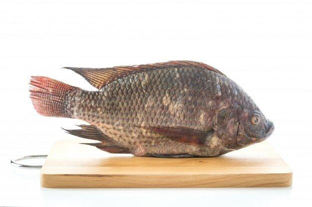 kandungan gizi ikan air tawar.jpg
