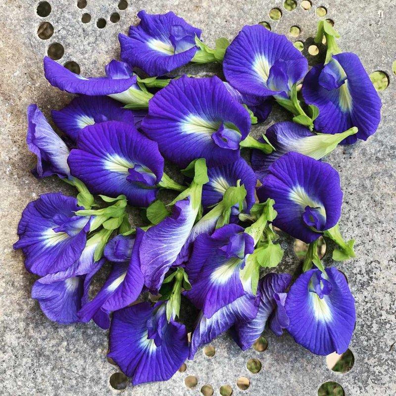 blue-butterfly-pea-seeds.jpg