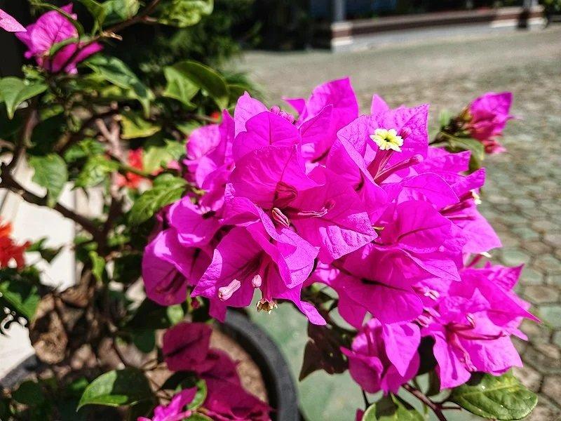 tanaman untuk pekarangan rumah