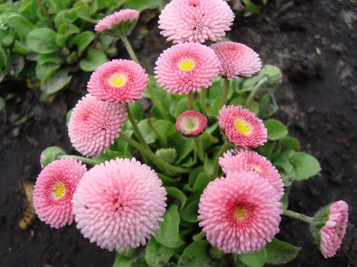 bunga untuk pekarangan rumah