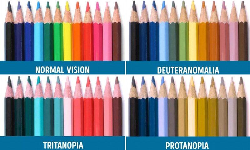 buta warna 2.jpg