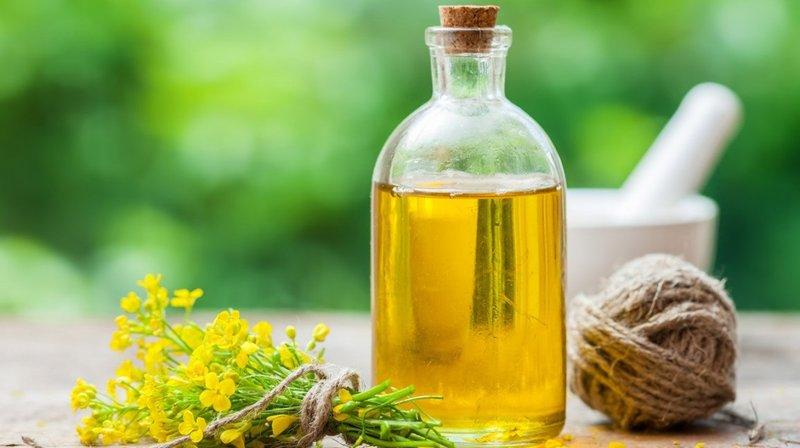 minyak zaitun, minyak canola