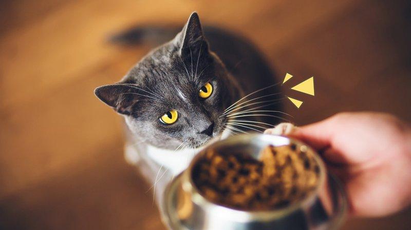 cara-membuat-makanan-kucing.jpg