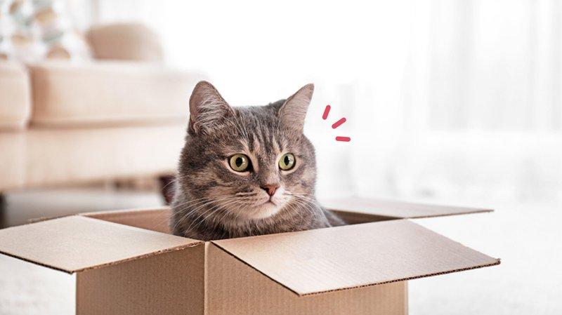 cara-membuat-rumah-kucing-dari-kardus.jpg