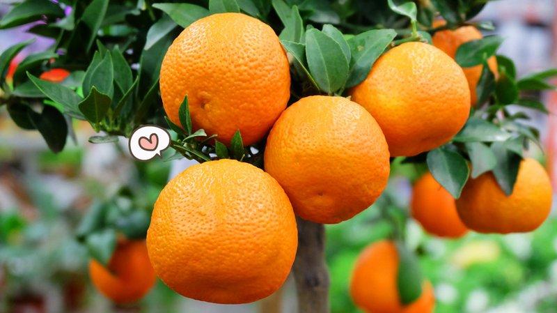 makanan mengobati ejakulasi dini jeruk
