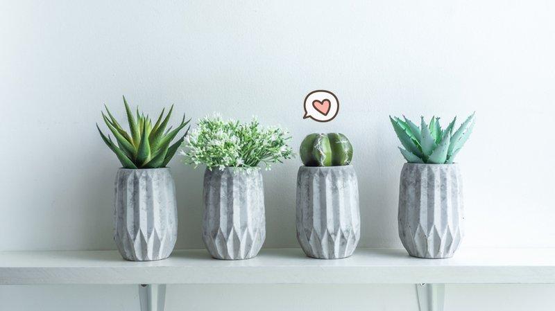 filosofi kaktus