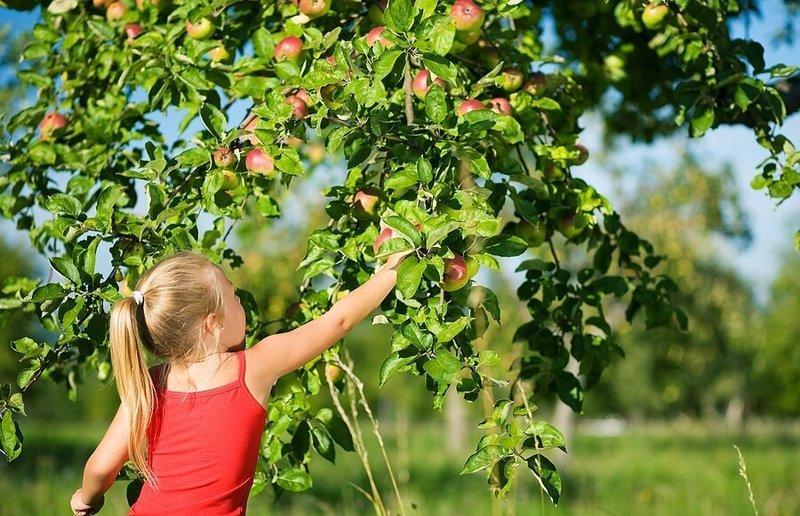 cara melatih keseimbangan memetik buah.jpg