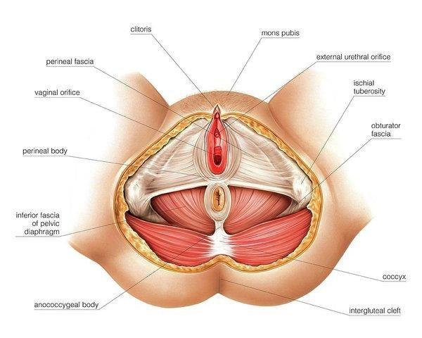 cara mendapatkan orgasme perineum2