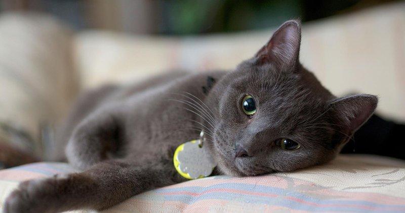 cat 217679