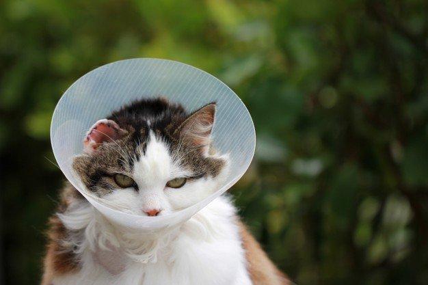 sterilkan kucing