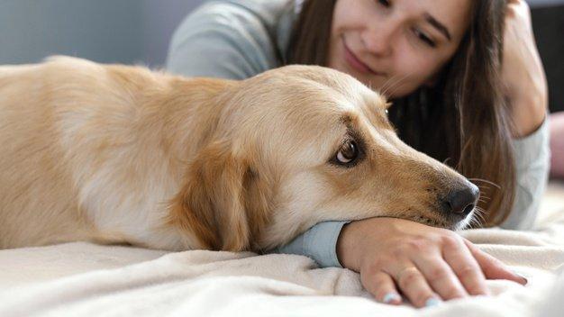 Basmi kutu anjing dengan alami
