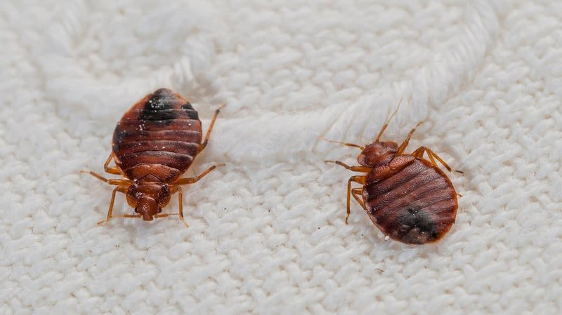 cr home inlinehero bed bugs 0918