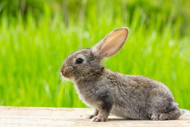 Sampo khusus kelinci penting agar tidak membuat iritasi