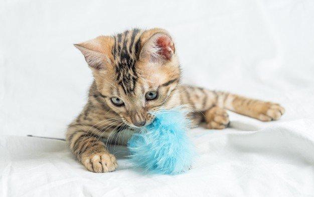 Anak kucing perlu diajarkan buang air
