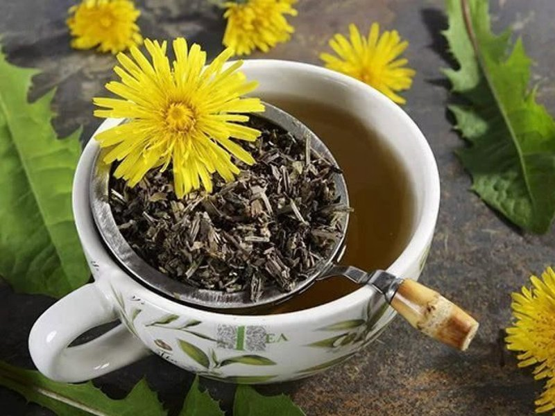 manfaat teh dandelion