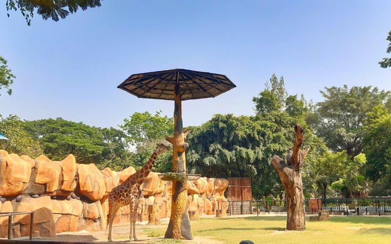 wisata Surabaya-kebun binatang Surabaya