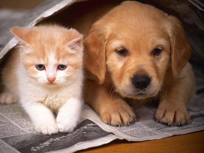 dog with cat hd animalplanethd.com
