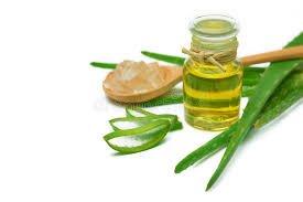 lidah buaya dan tea tree oil