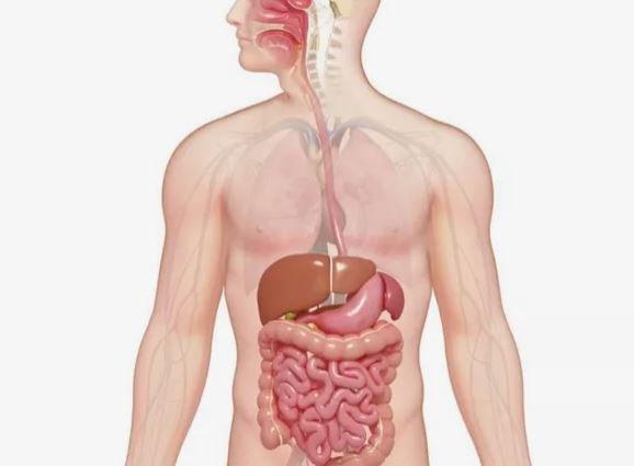 enzim pencernaan