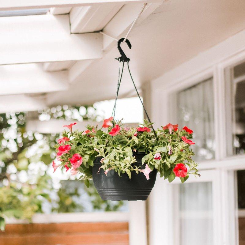 flower-hanging-baskets-1315952-hero-7c26e93774cd48aa9136ac8a74b4d2e6.jpg