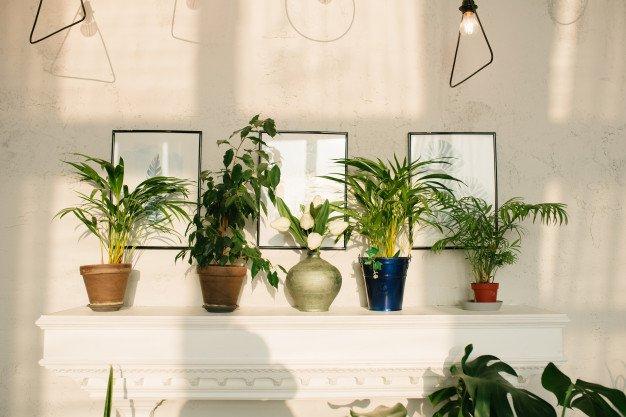 fotosintesis tanaman indoor.jpg