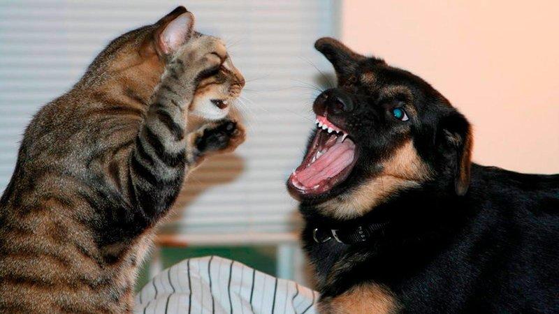 gigitan kucing anjing