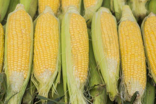 sumber protein nabati - jagung manis kuning