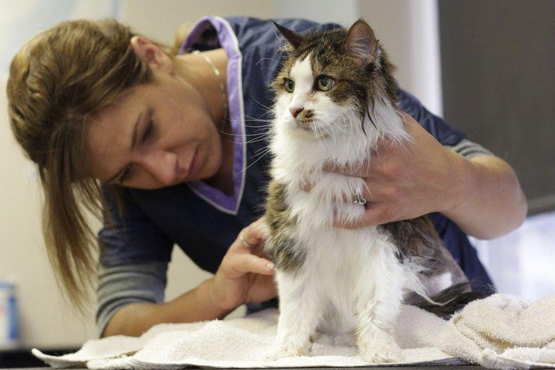 Kucing juga perlu grooming teratur