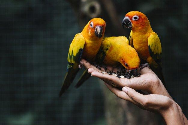 Burung harus nyaman